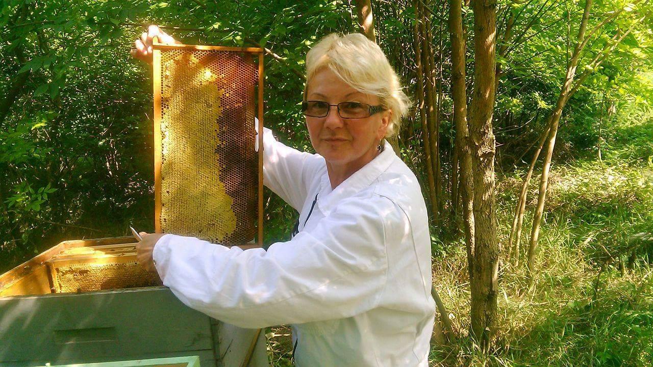 Ilustracija: Tatjna Mrdak na pčelinjaku