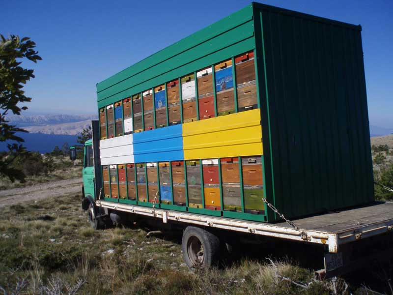 Ilustracija: selidba pčela, foto: http://www.pcelarstvo.org/