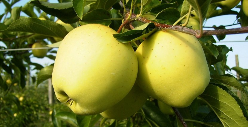 Ilustracija: plod jabuke, foto: http://greeny.co.rs/