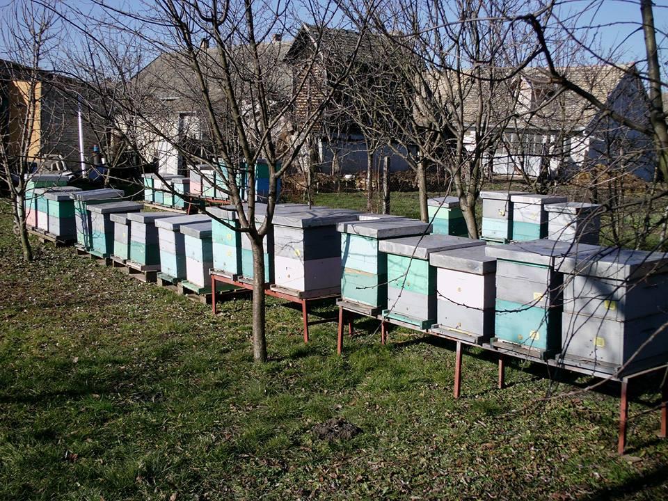Pčelari ne mogu na pčelinjak koji su stariji od 65 godina