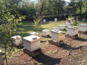 Pčelinjak Mijajilović. Ražanj