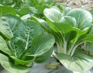 Ilustracija: organska hrana, foto: agrosmart
