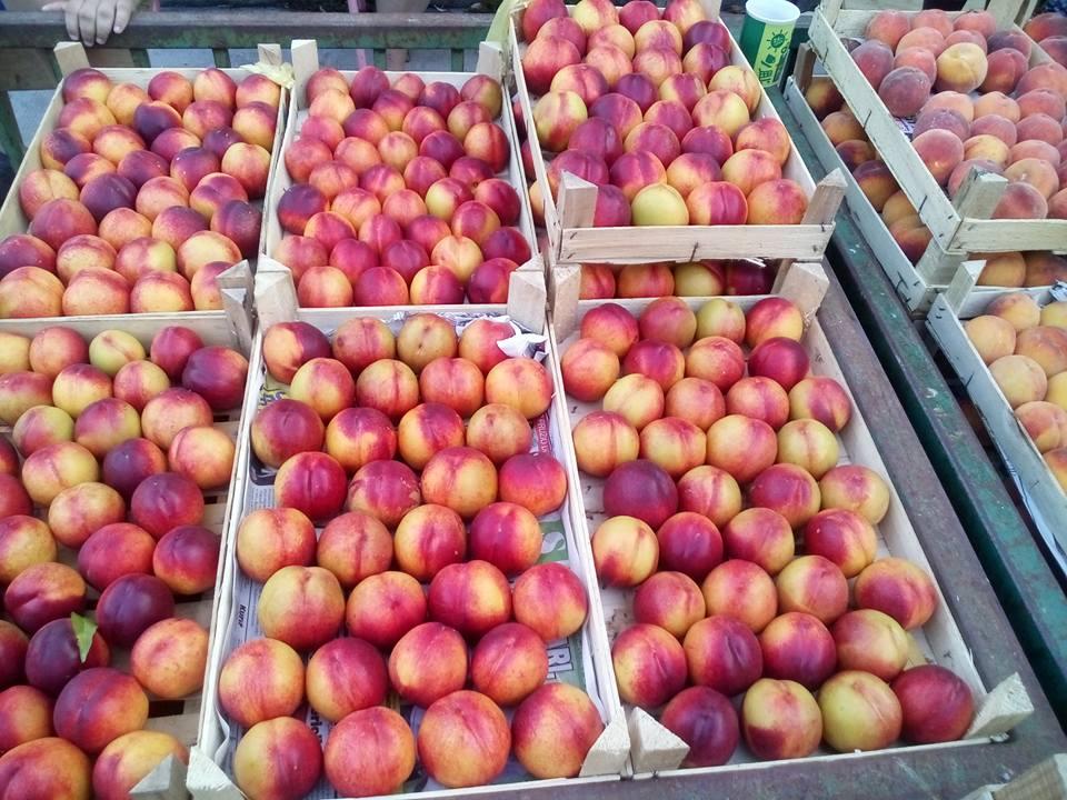 Ilustracija: voće, foto, Domaćinska kuća
