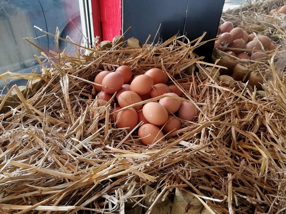 Ilustracija: sveža jaja, foto: Domaćinska kuća