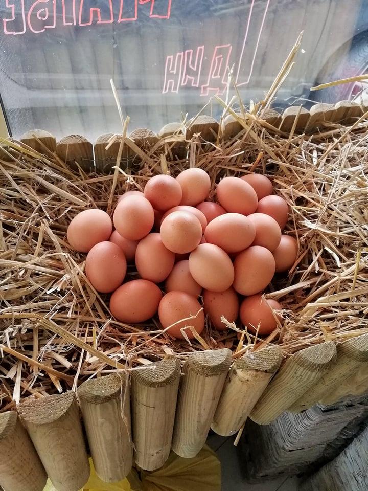 Ilustracija: jaja, foto Domačinska kuća