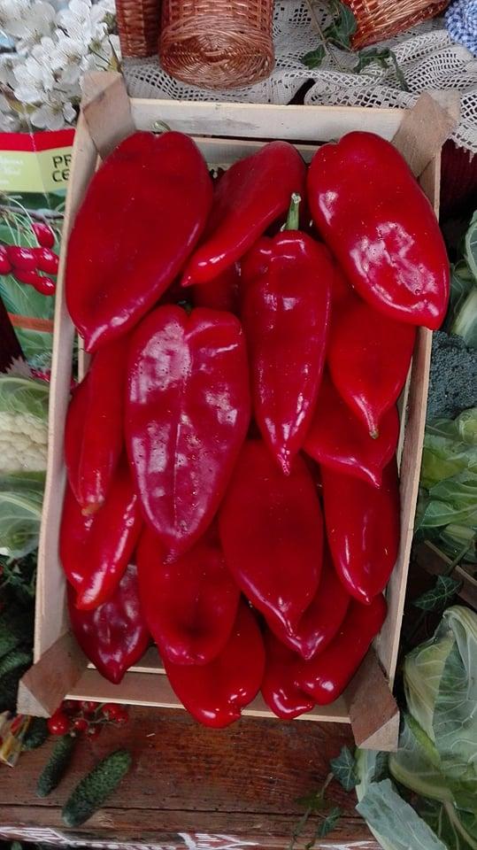 Ilustracija: paprika, foto: Domaćinska kuća