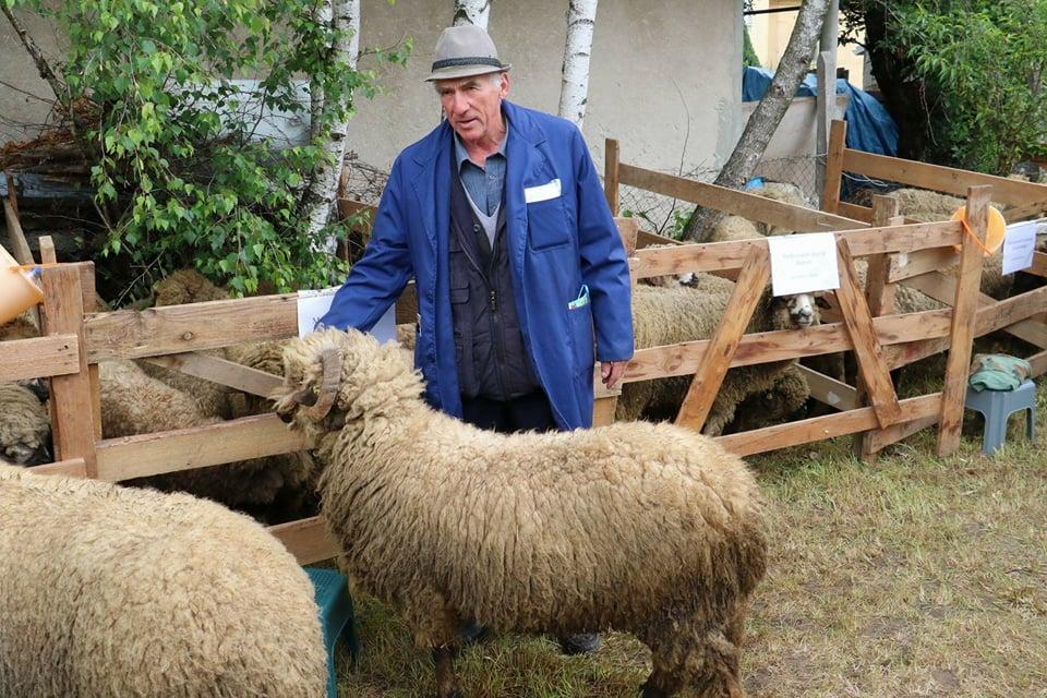 Ilustracija. Svrljiške ovce, foto: Domaćinska kuća