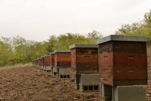 Ilustracija. Pčelinjak, foto: Rodoljub Živadinović