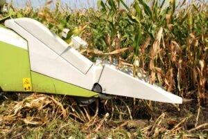 Ilustracija: berba kukuruza. foto: Domaćinska kuća