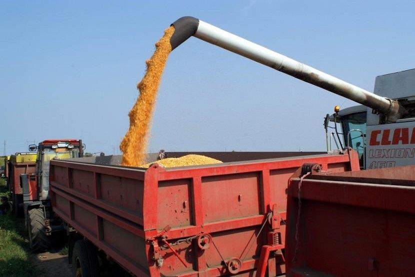 Ilustracija: berba kukuruza