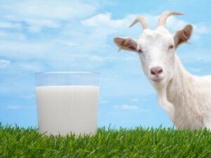 Ilustracija: kozje mleko, foto: http://wellitude.com