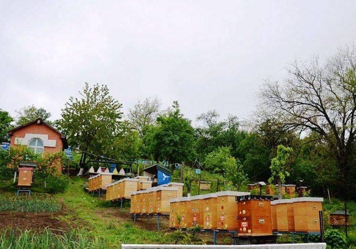 Ilistracije: pčelinjak