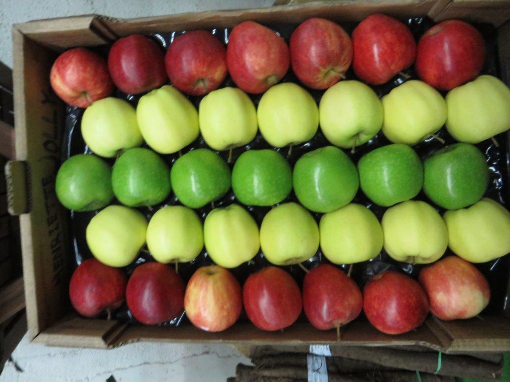 Ilustracija: Jabuke za izvoz