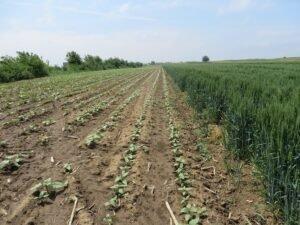 Ilustracija: poljoprivredno zemljište, foto: Domaćinska kuća