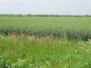 Ilustracija: poljoprivredno zemljište. foto: Domaćinska kuća
