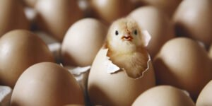 Ilustracija, inkubacija jaja, foto: https://cdn0.tnwcdn.com