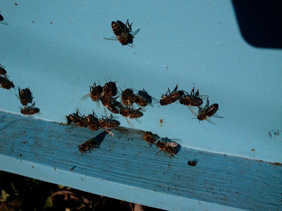 Ilustracija: pčelinjak Tatjane Mrdak