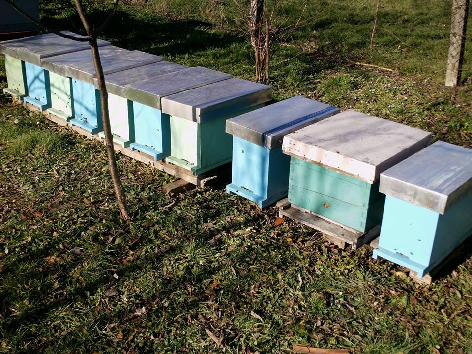 1Ilustracija:Pčelinjak, foto: Domaćinska kuća