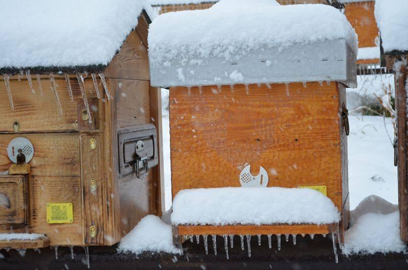 Ilustracija: Pčelinjak u januaru, foto: Slobodan Jevtić