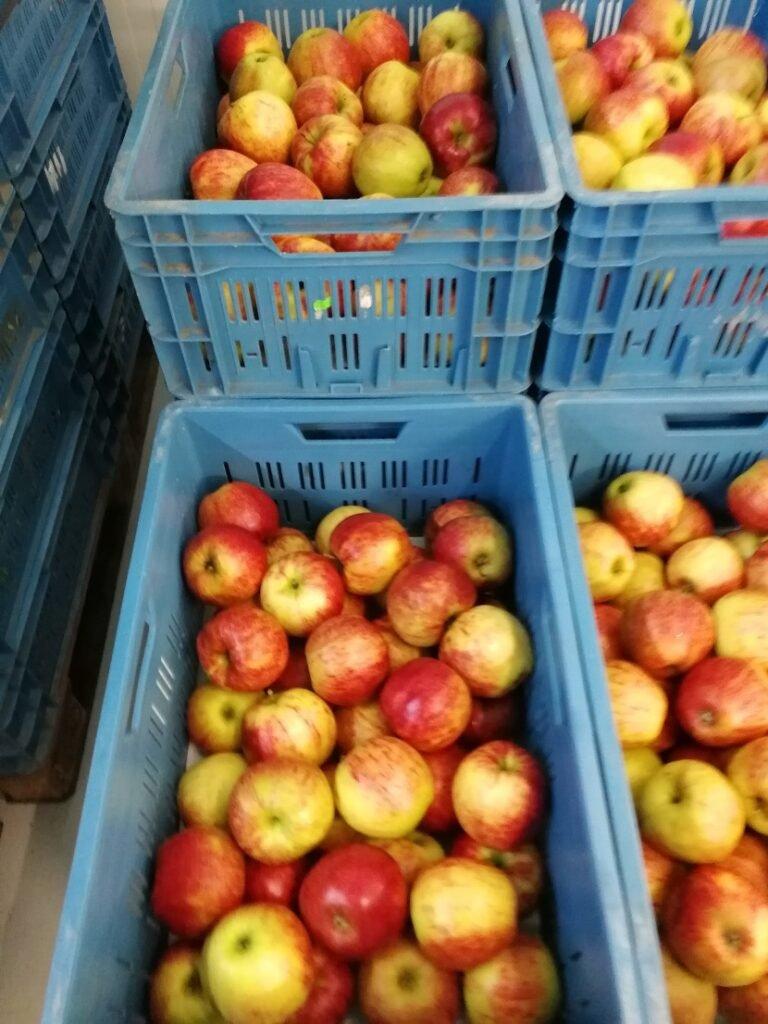 Ilustracija: jabuke spremne za prodaju, foto: S.K.