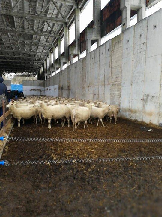 Češka, poljoprivreda, foto: S.K. / Domaćinska kuća