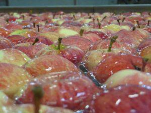 Ilustracija: francuske jabuke,
