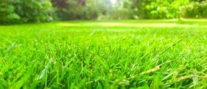 Ilustracija. travnjak, foto: http://vrt.hr/wp-content/uploads/
