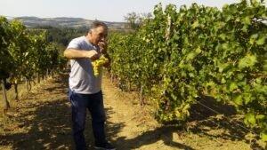 Ilustracija: Vinograd u Valjevu, foto: Dejan Davidović