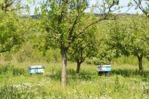 Ilustracija: voćnjak, foto: S.K.