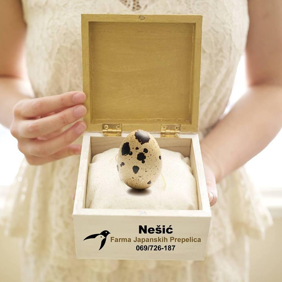 Ilustracija: jaje japanske prepelice, foto: S.N.