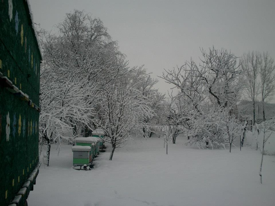 Ilustracija: Voćnjak zimi, foto: T.M.