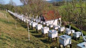 Ilustracija: pčelinjak Mijajlović, foto: M,M