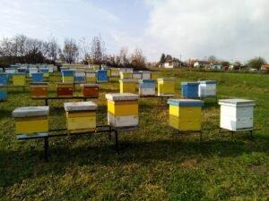 Ilustracija: Pčelinjak u okolini Valjeva, foto: D.D.
