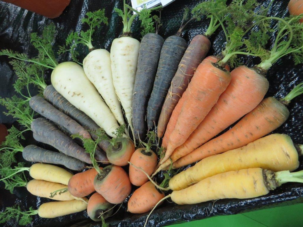Ilustracija: organska poljoprivreda, foto: S.K.