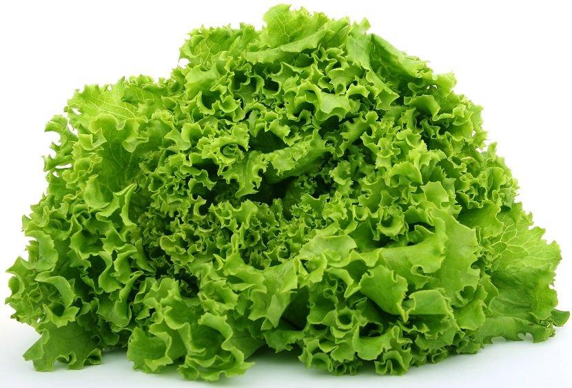 Ilustracija: zelena salata, foto: http://www.eldoville.co.ke/