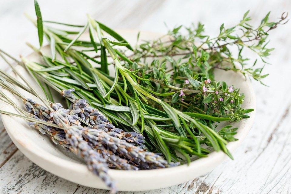 Ilustracija: sušeno lekovito bilje, foto: pixabay