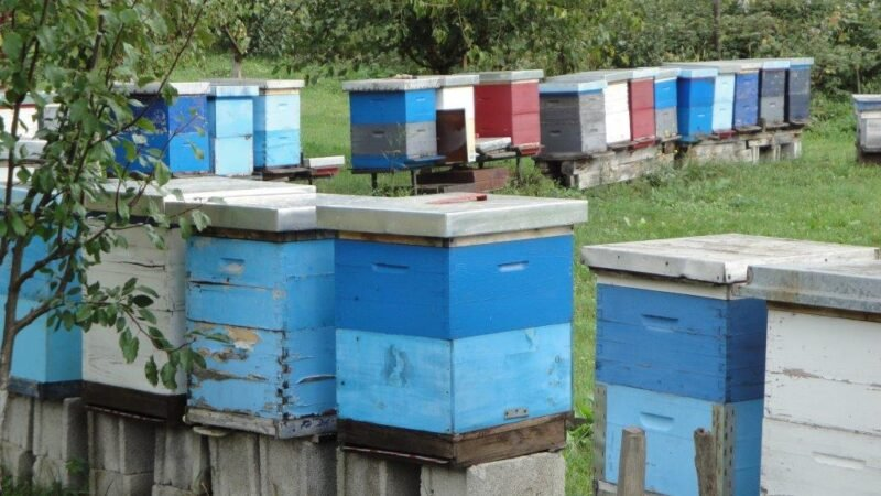 Da li će imati dovoljno meda - Domaćinska kuća