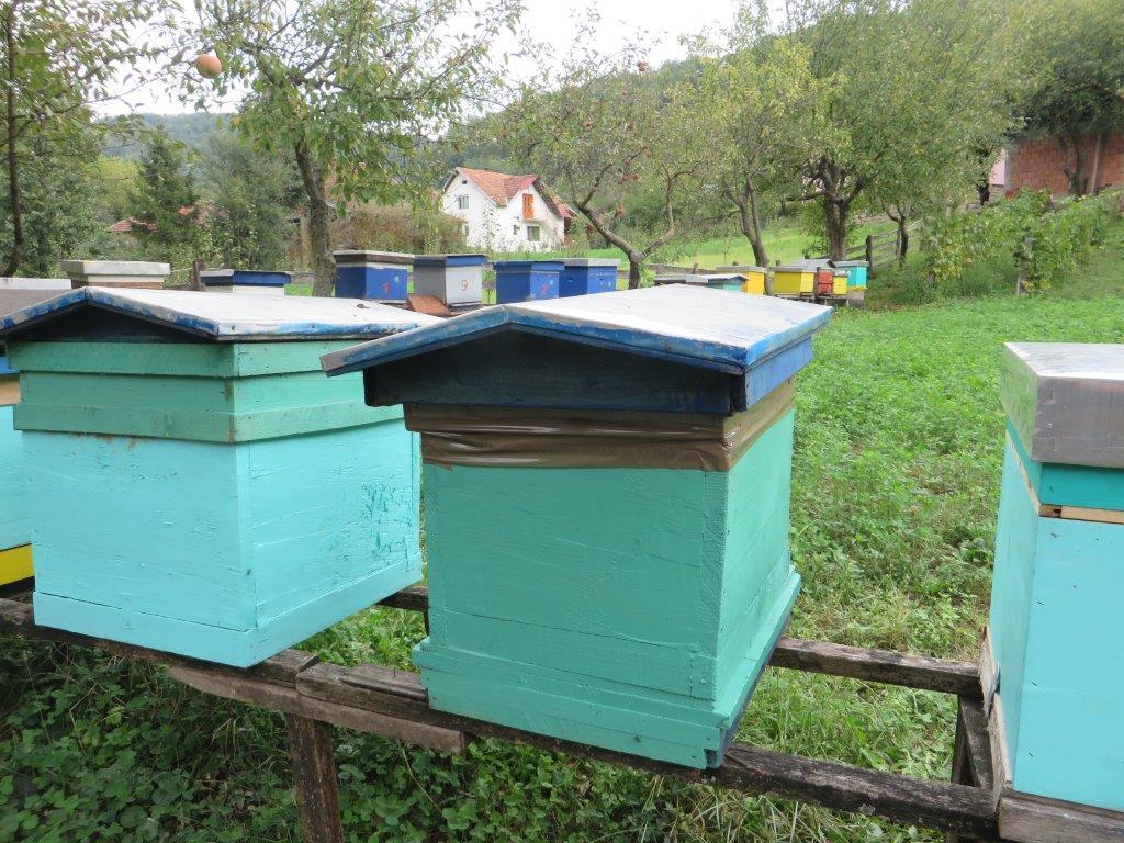 Ilustracija: pčelinjak. foto: S.K.