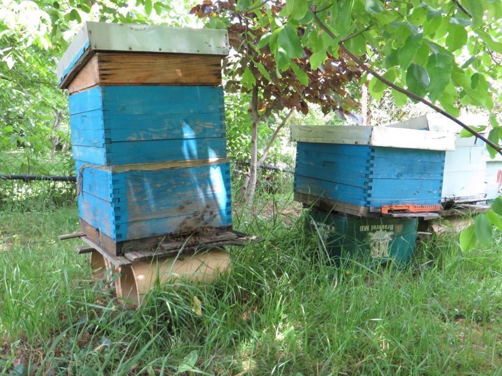 Ilustracija: Pčelinjak. foto: S,K.