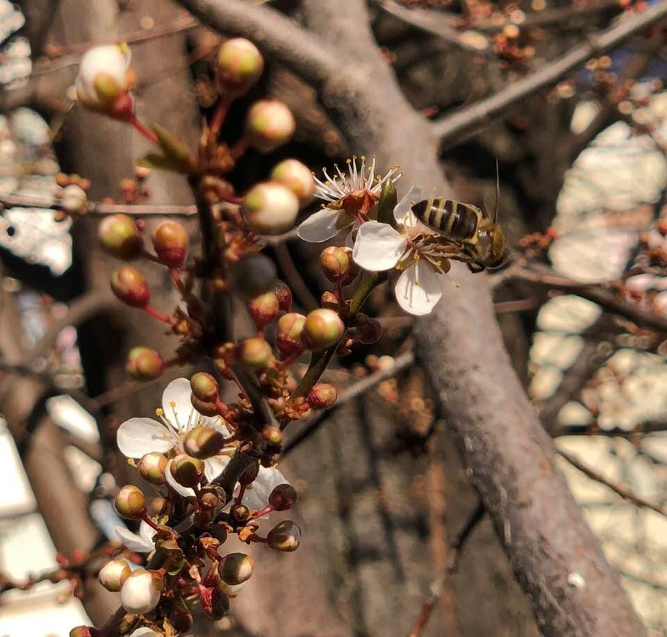 Ilustracija: Pčela u martu, foto: Rodoljub Živadinović