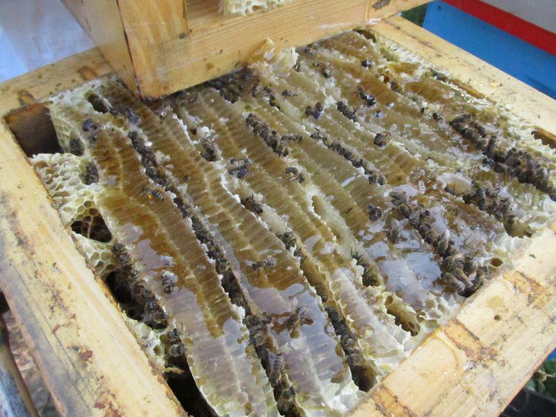 Ilustracija: krediti i za  pčelarstvo