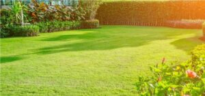Ilustracija: travnjak, foto: http://www.e-konomista.pt/