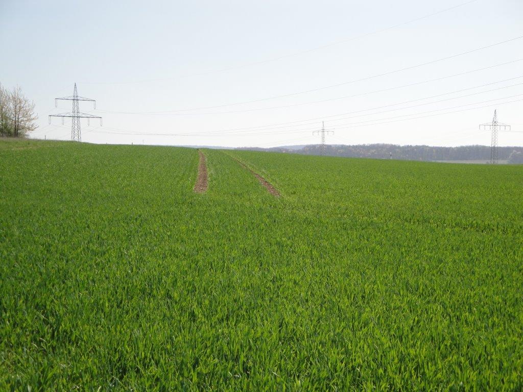Ilustracija: poljoprivredno zemljište, foto: G.Đ.