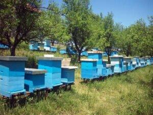 Ilustracija: pčelinjak Kovačević, foto: Goran Đaković