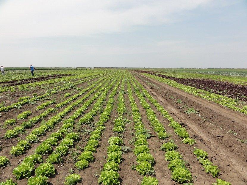 Ilustracija: organska proizvodnja povrća