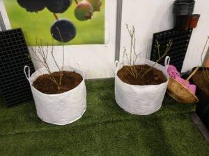 Ilustracija: borovnice u vreći, foto: Domaćinska kuća