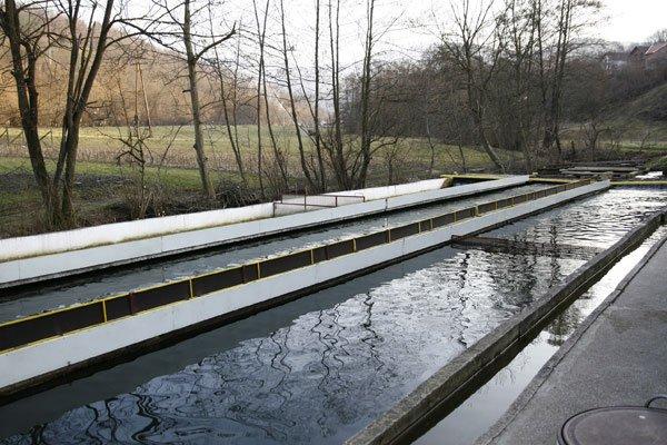 Ilustracija: Ribnjak, foto: http://privrednik.rs