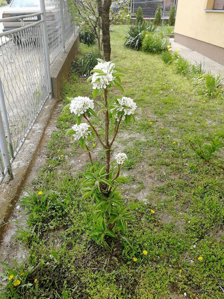 Ilustracija: Voće u cvetu, foto: Domaćinska kuća