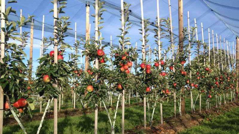 Prihrana u organskoj poljoprivredi