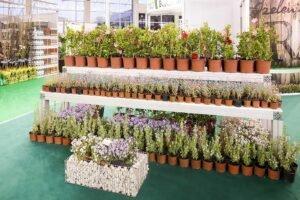 Ilustracija: Sajam hortikulture, foto: sajam.rs